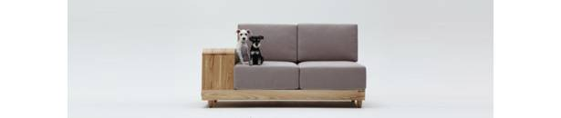 dog_on_sofa